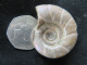 MOTHER OF PEARL AMMONITE - CRETACEOUS, MADAGASCAR